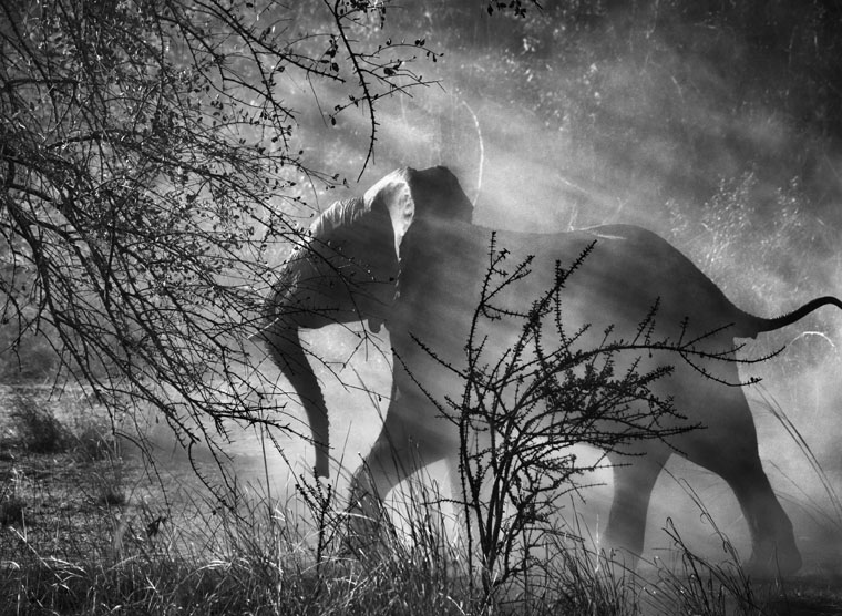 Kafue National Park, Zambia, 2010 © Sebastião Salgado Amazonas Images