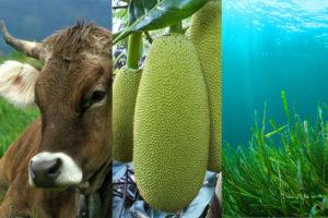 3-tendenze-alimentari_bioecogeo