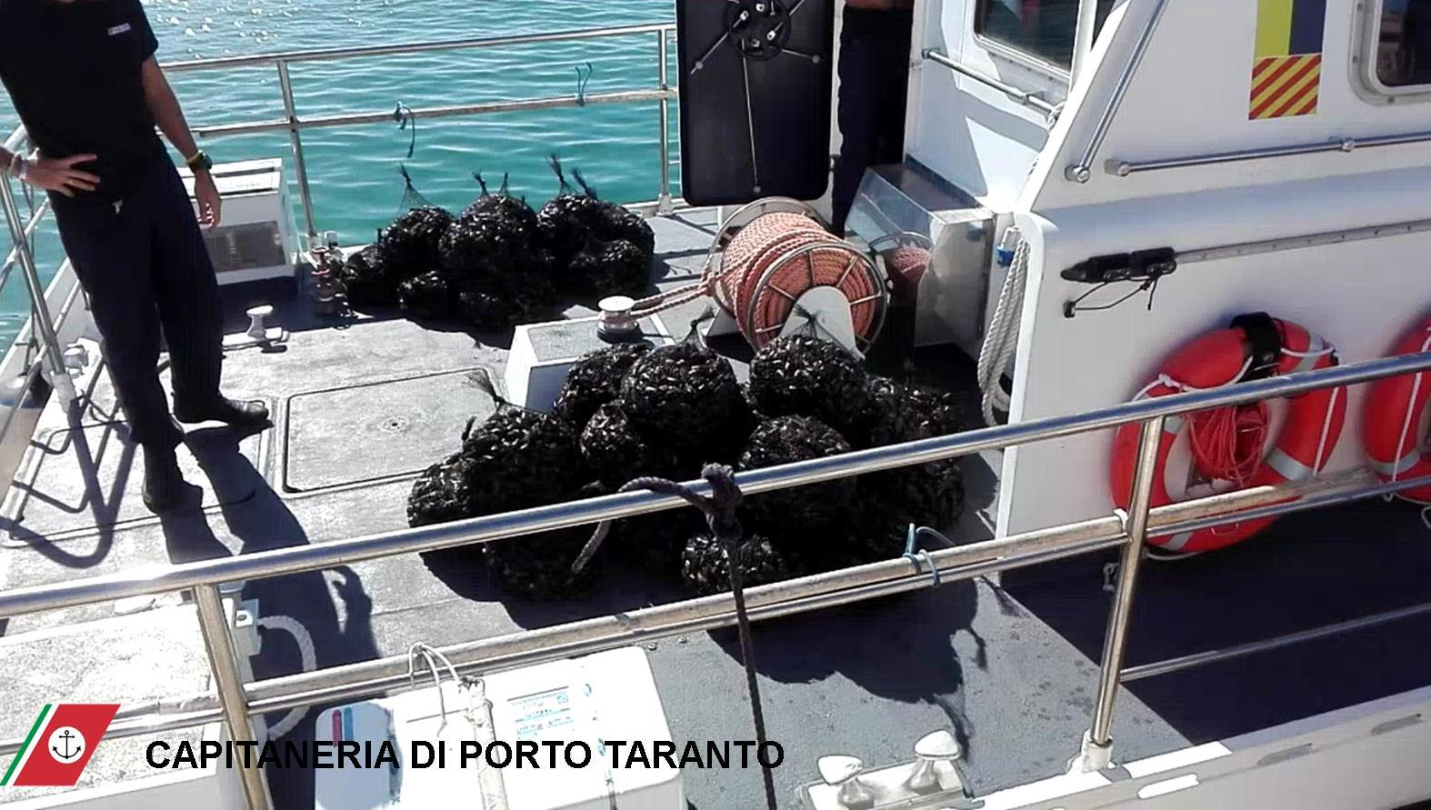BioEcoGeo_Taranto_cozze