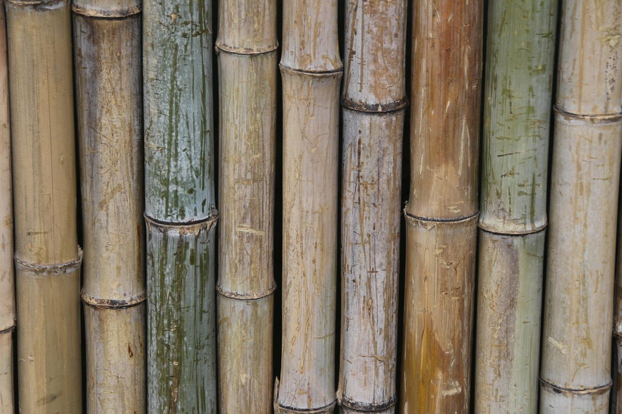 BioEcoGeo_parquet bamboo