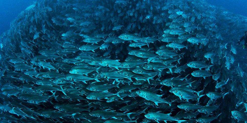 BioEcoGeo_Ocean-Conference-©-Edwar-Herreño