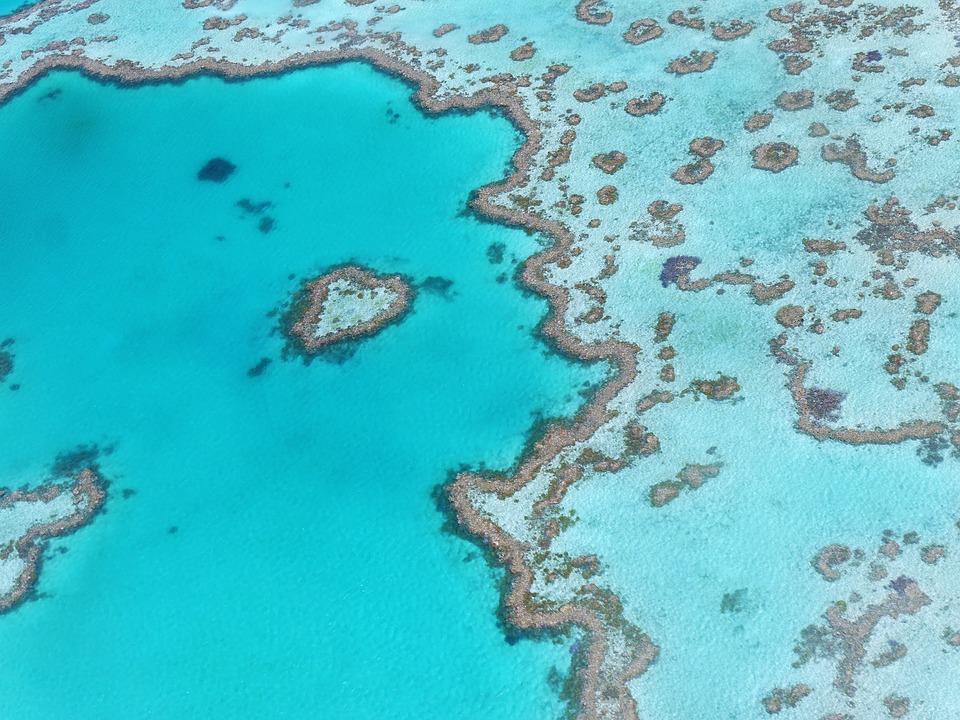 La barriera corallina australiana è famosa in tutto il mondo per la sua grandezza e bellezza