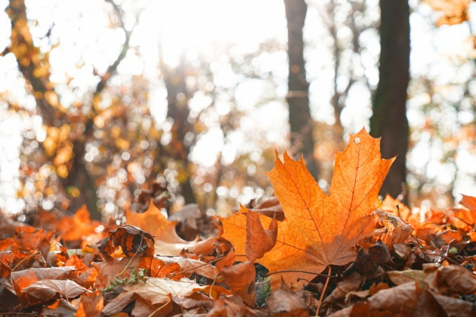 BioEcoGeo-autunno