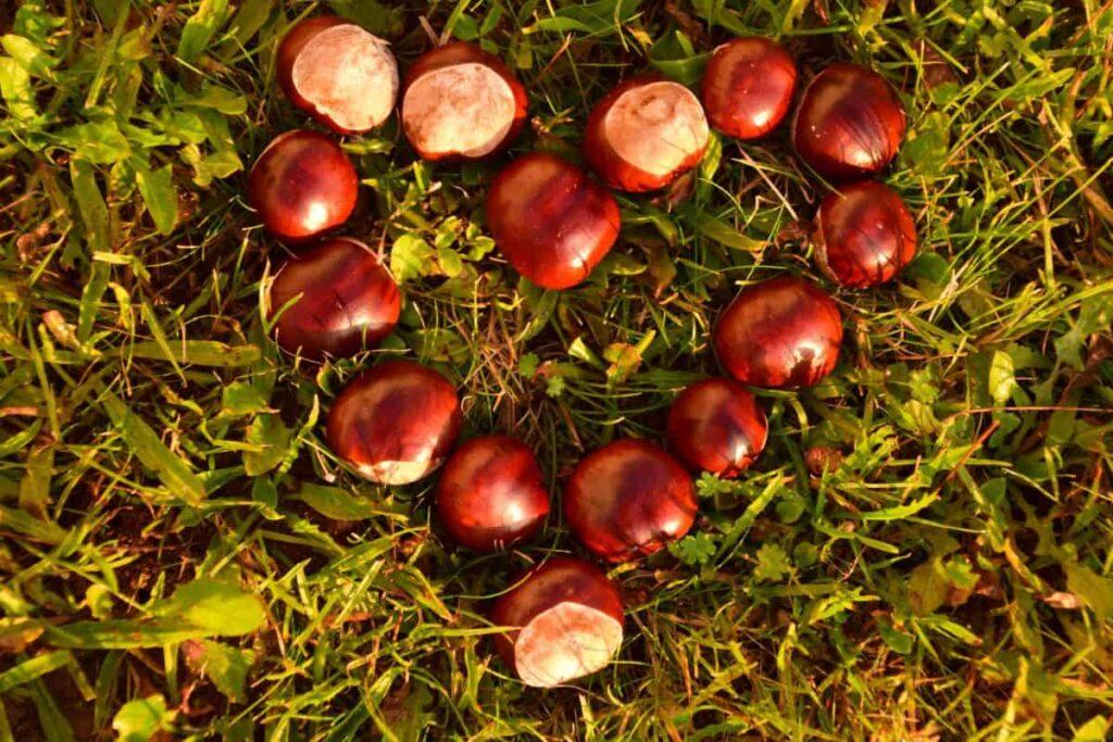 cuore di castagne