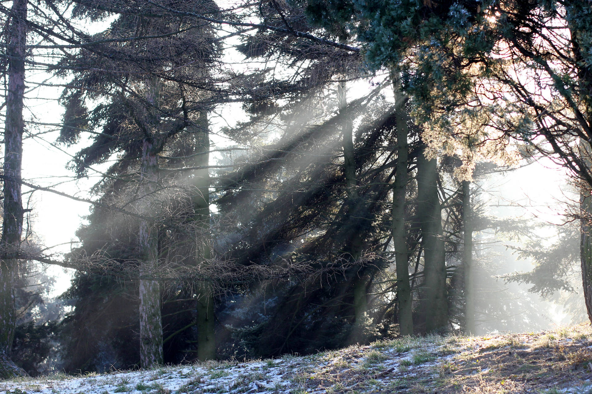 Free picture (Trees winter forest sunlight tree) from https://torange.biz/tree-sunlight-forest-winter-trees-51490