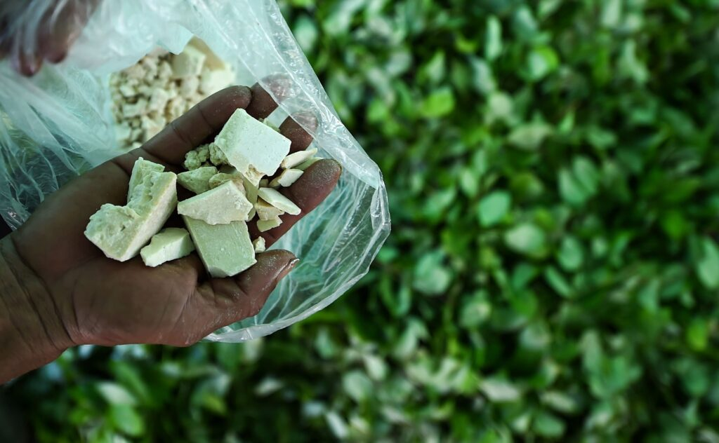 BioEcoGeo_cocaina_piantagione