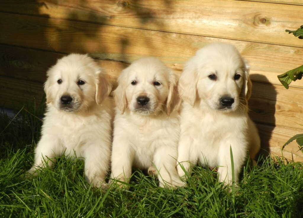 BioEcoGeo_puppy_dog