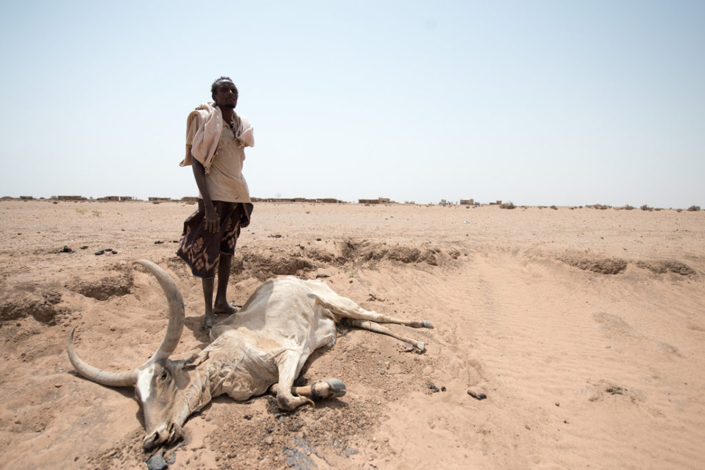 A man standing by his dead cow, in Hadigala village, Shinile district, Somali region. 8th July 2015