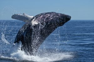 whale_bioecogeo