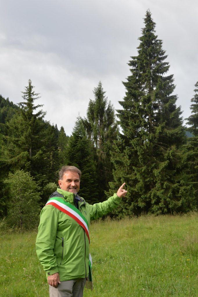 albero-natale-san-pietro-scurelle-vert