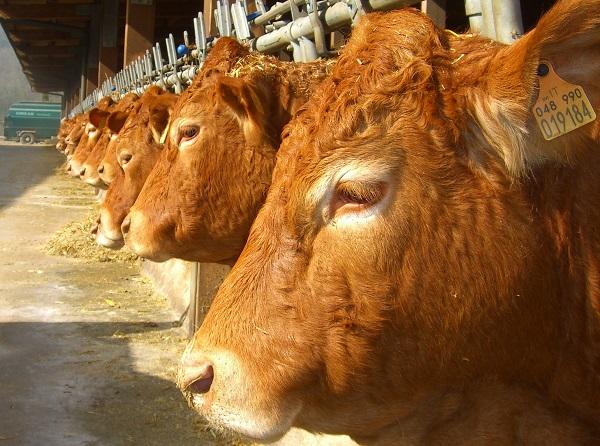 BioEcoGeo_mangimi_bestiame