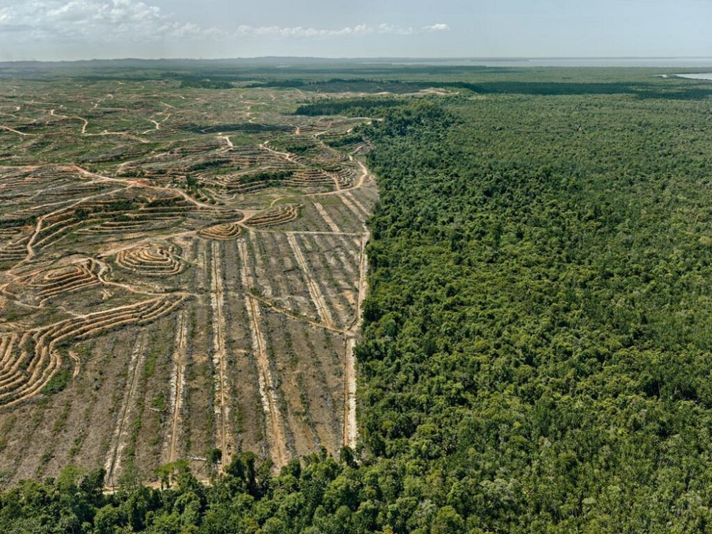 Clearcut #1, Palm Oil Plantation, Borneo, Malaysia 2016 photo © Edward Burtynsky, courtesy Admira Photography, Milan / Nicholas Metivier Gallery, Toronto