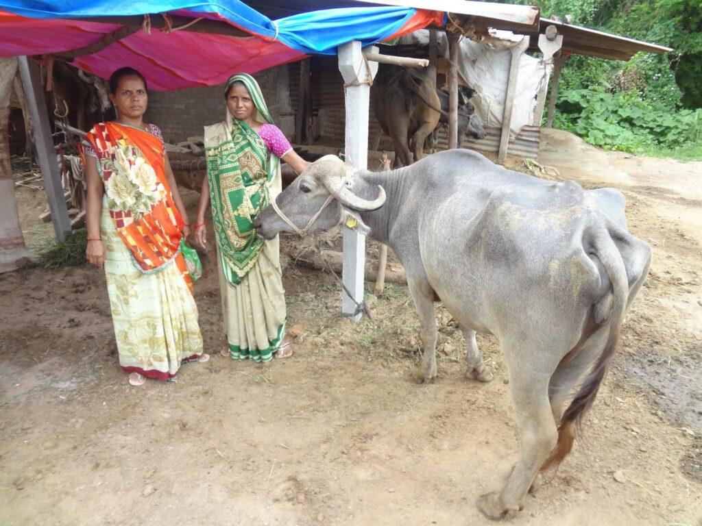 BioEcoGeo_allevamento_India