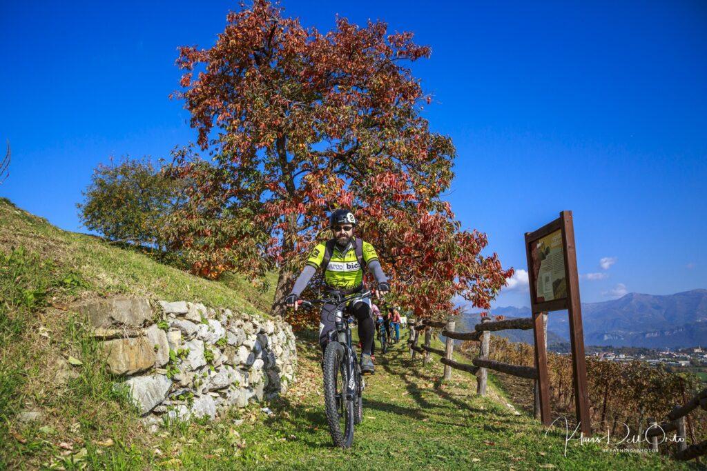Foliage_e-bike