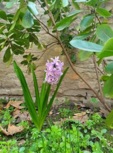 giardino ilturco interno verde 3