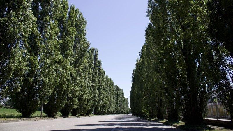 BioEcoGeo_alberi_Galvani